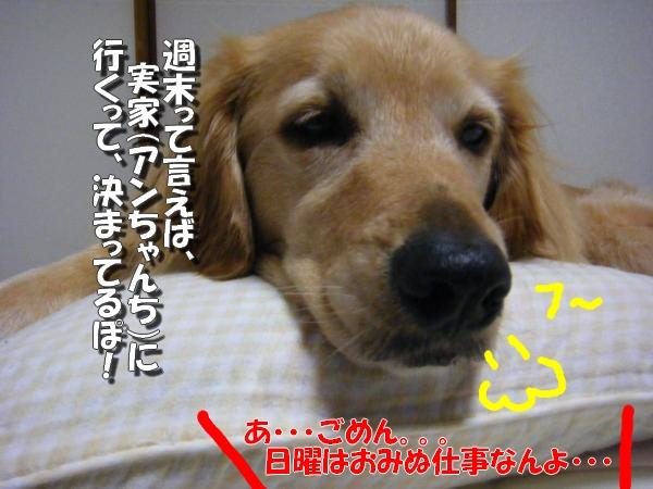 DSCF6024_20110730011615.jpg