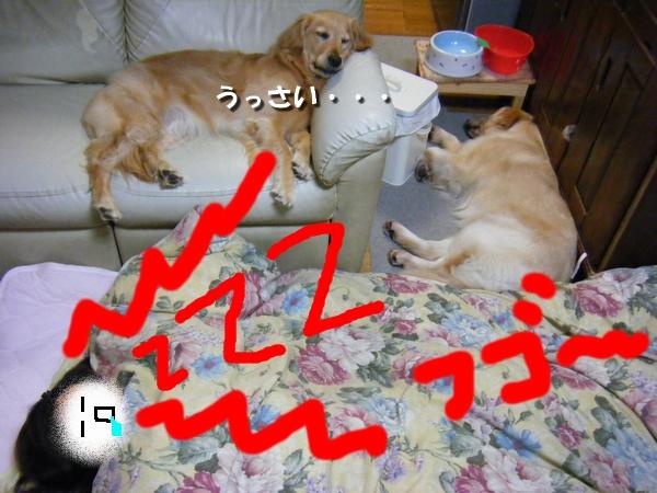 DSCF7022_20110612230032.jpg