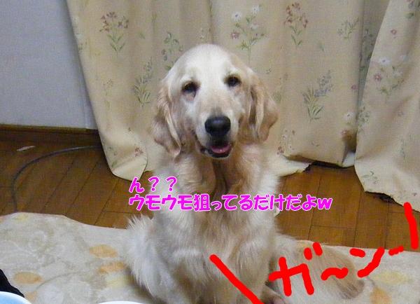 DSCF7100_20110614235835.jpg