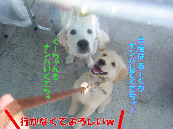 DSCF7109_20110815161556.jpg