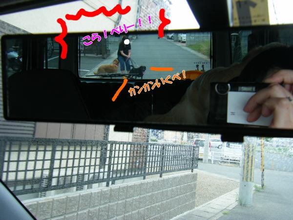 DSCF7145_20110621004307.jpg