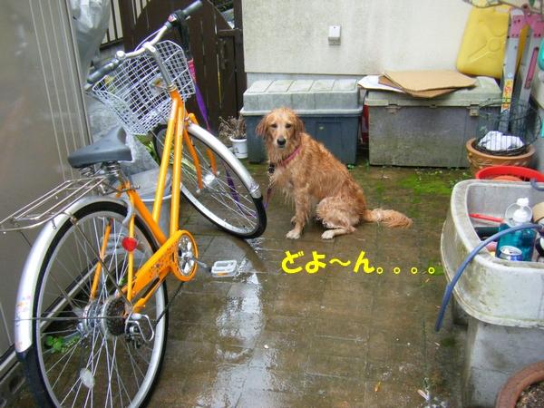 DSCF7146_20110621004306.jpg