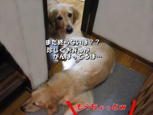 DSCF7185_20110619012736.jpg
