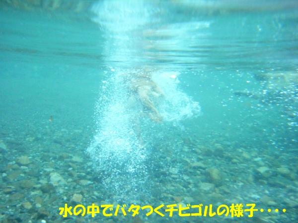 DSCF8002_20110721005404.jpg