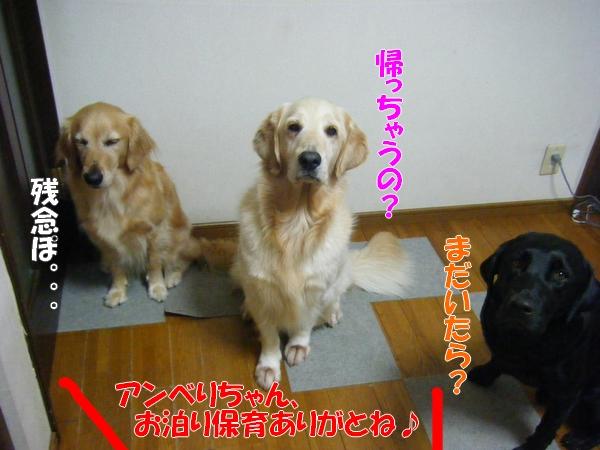 DSCF8002_20110823201304.jpg