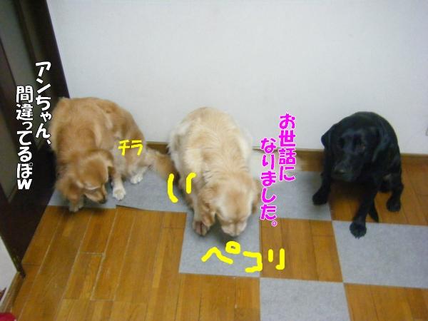 DSCF8018_20110823201303.jpg