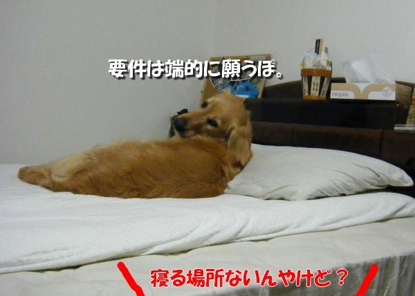 DSCF9004_20110628235448.jpg