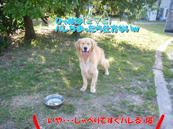 DSCF9048_20110630000031.jpg