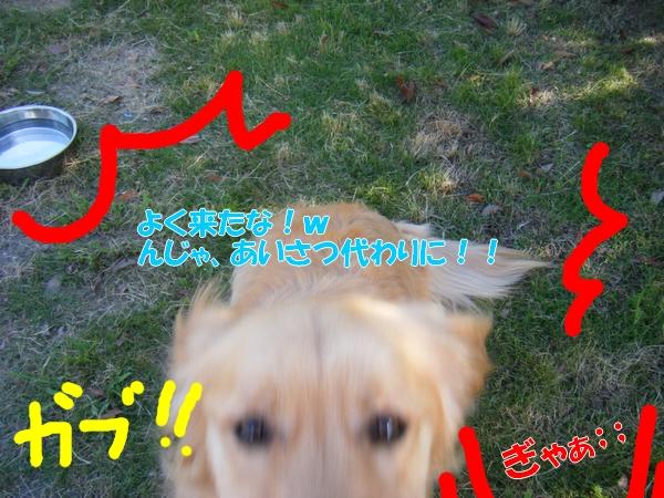 DSCF9051_20110630000030.jpg