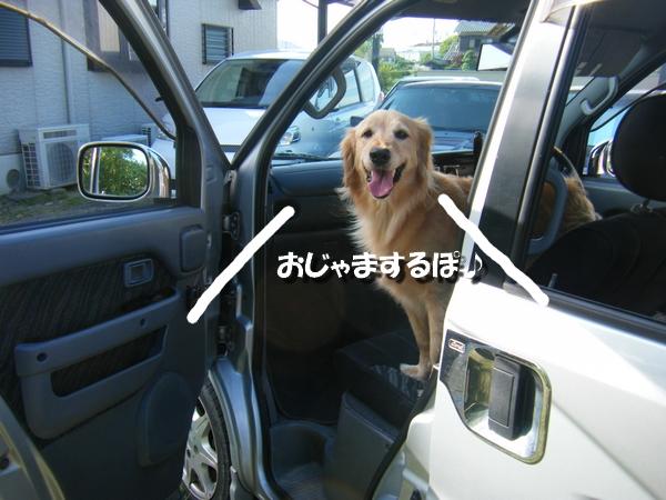 DSCF9054_20110630000104.jpg