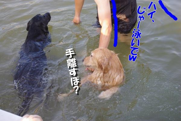 IMGP0022_20110805233850.jpg