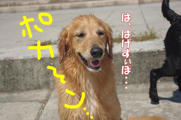 IMGP0063_20110927003459.jpg