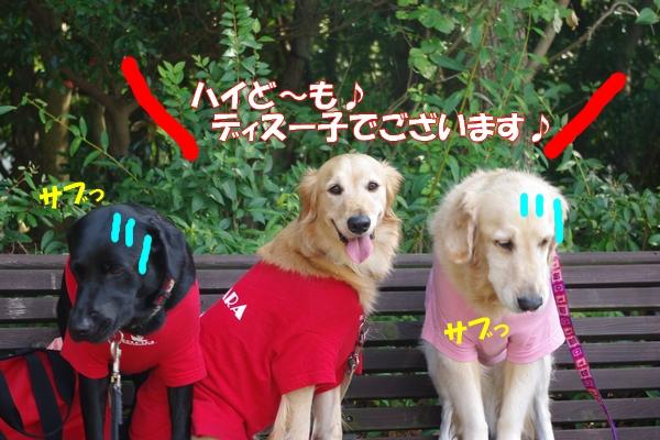 IMGP3119_20111012000547.jpg