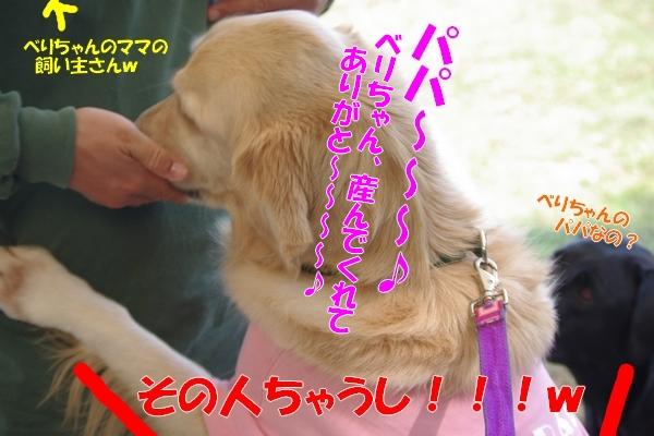IMGP3159_20111013002823.jpg