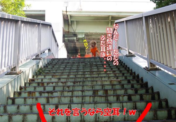 IMGP5041_20111019003625.jpg