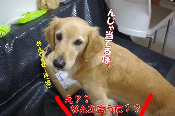 IMGP5202_20111018001920.jpg