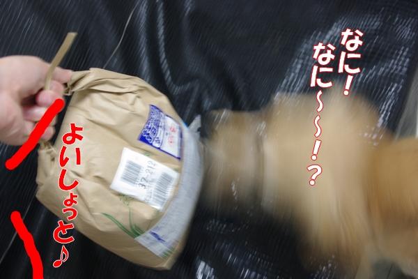 IMGP5211.jpg