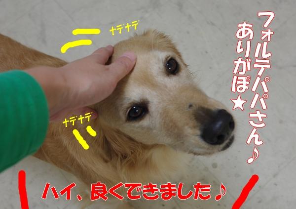 IMGP5213_20111018001918.jpg