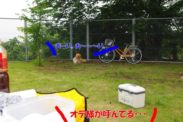 IMGP7244.jpg