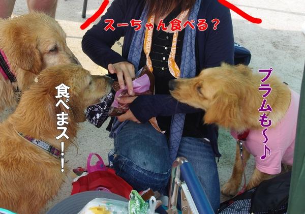 IMGP9077_20110822210900.jpg