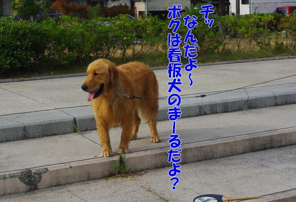 IMGP9110_20110815161642.jpg