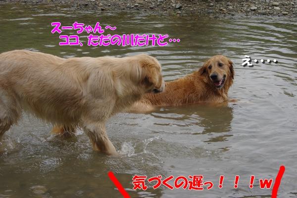 IMGP9152_20110705001006.jpg
