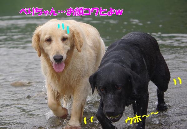 IMGP9201_20110706234908.jpg