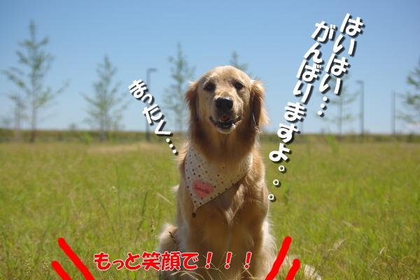 IMGP9273_20110713002556.jpg