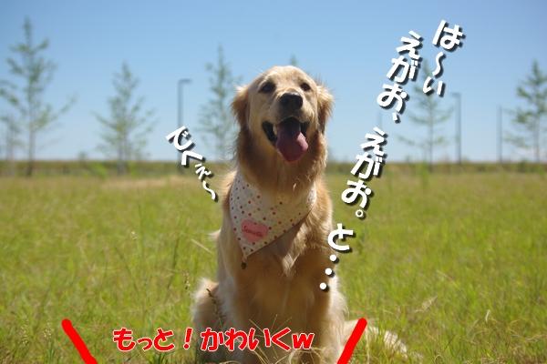 IMGP9274_20110713002556.jpg