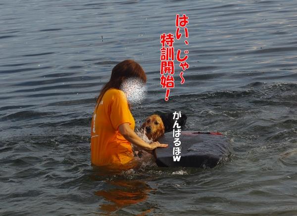 IMGP9402_20110831000359.jpg