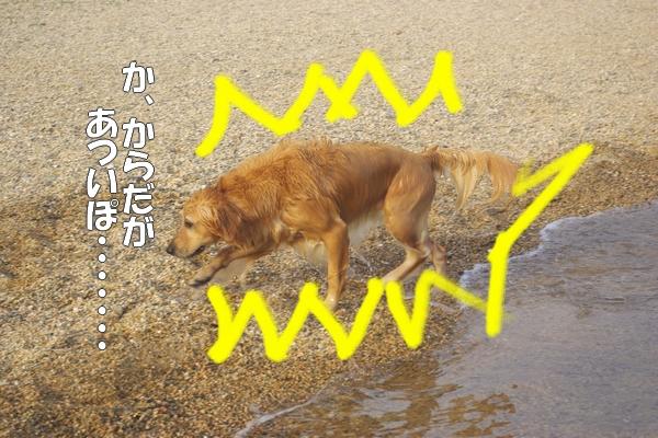 IMGP9417_20110822212148.jpg