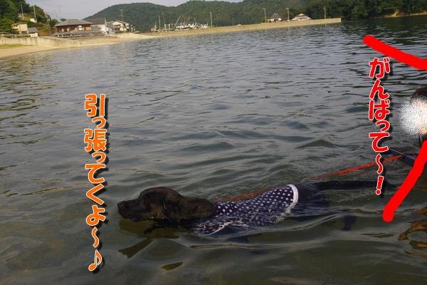 IMGP9458_20110826002840.jpg