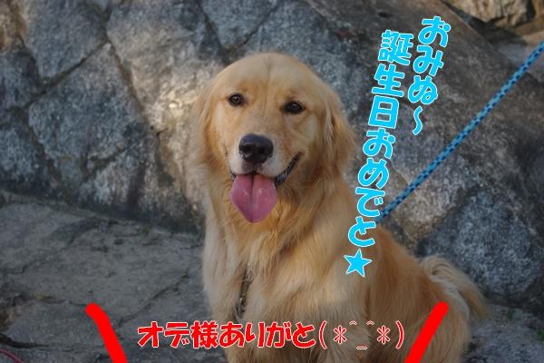 IMGP9478_20110719001857.jpg