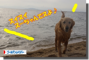 IMGP9654_20110511232055.jpg