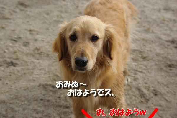 IMGP9669_20110511230108.jpg