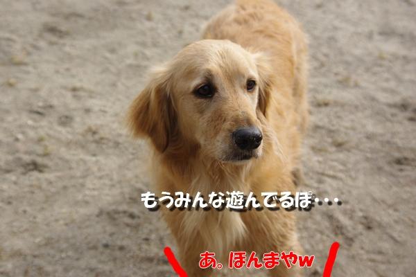 IMGP9670_20110511230108.jpg