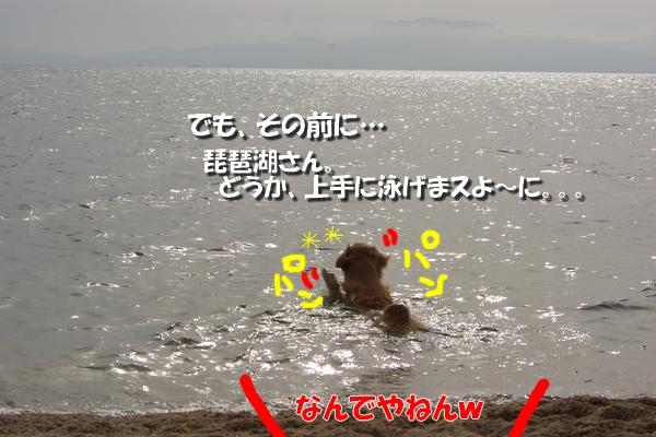 IMGP9687_20110511230237.jpg