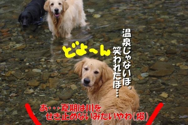 IMGP9696_20110722004716.jpg
