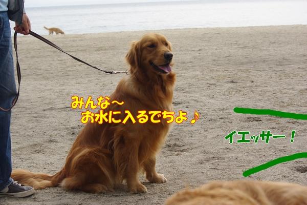 IMGP9729_20110513005840.jpg