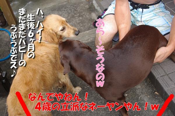 IMGP9748_20110721235914.jpg