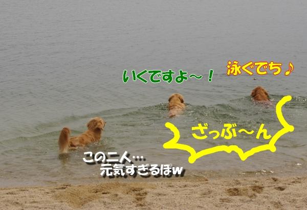 IMGP9764_20110513005840.jpg