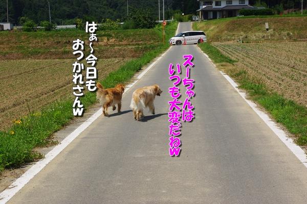 IMGP9856_20110801003838.jpg