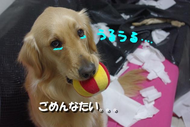 IMGP9964.jpg