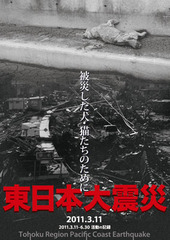 東日本大震災~被災した犬・猫のために~