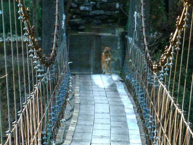 串の吊橋10