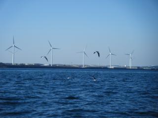 20100130風車