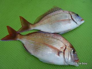 20100411花鯛