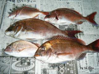 201005050蒲谷丸釣果