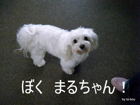 20100622新修丸まるちゃん