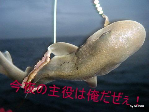 20100703サメ